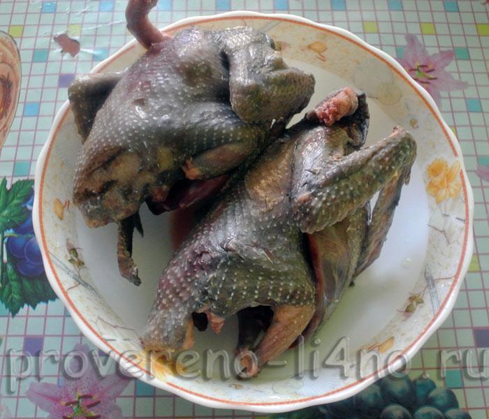 golaya-golub